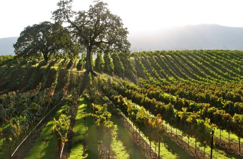 Sonoma Valley Launches New Campaign